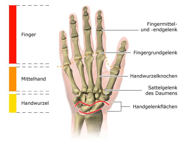 Grafik: Fingergelenke
