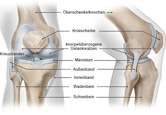 Grafik: Ansicht des rechten Knies von vorne und von der Seite
