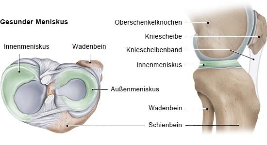 Grafik: Gesunder Meniskus (Ansicht: links Querschnitt rechtes Knie von oben, rechts seitlich)